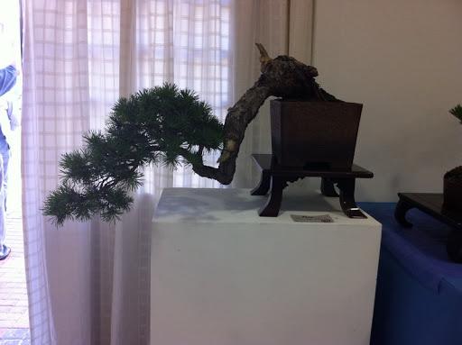 Exposición en Benalmadena IMG_0481
