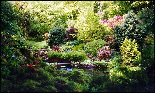 foresta giardino.jpg