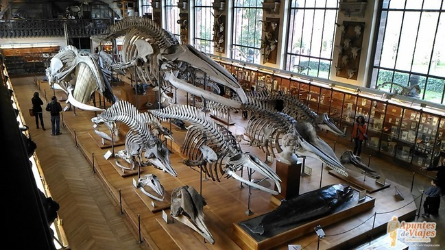 Museos Paris Historia Natural 6