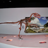 Houston Museum of Natural Science - 116_2670.JPG