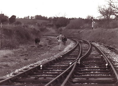 Chris Stokes chases off an invasion of cows.   Date: 1989.   Photo:  ?  (B111)
