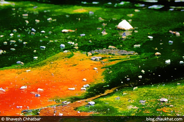 Beautiful shades of green and orange created by bacteria, algae and micro-organisms of Waimangu Stream [Frying Pan Lake overflow stream] at Waimangu Volcanic Valley in New Zealand