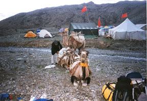 Caravane de chameaux en partance pour le camp de base