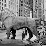Chicago (9 of 83).jpg