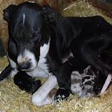 Gidget's babies @ 1 week