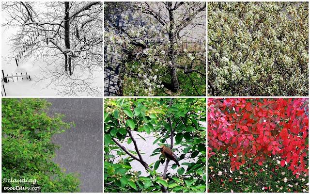 Copacul si anotimpurile
