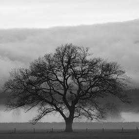 Lone Oak by Bryan Lowcay - Black & White Landscapes ( raw,  )