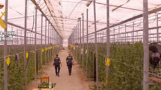 Imagen de archivo de la Guardia Civil en un invernadero utilizado para cultivar marihuana.