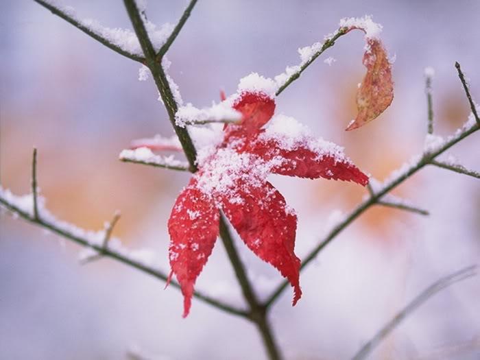 Thơ mùa đông 5 chữ