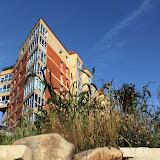 Выращено и высажено на склоны ручья Уинка более 500 однолетних растений. Злаки на фоне дома Гайдара 3