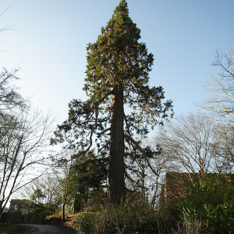Stowe_Trees_07.JPG