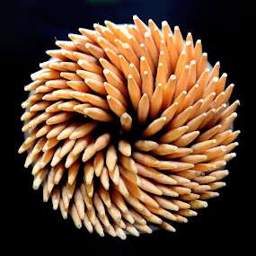 Wooden rounds by Sanjeev Kumar - Artistic Objects Other Objects (  )
