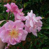Gardening 2012 - 115_1367.JPG