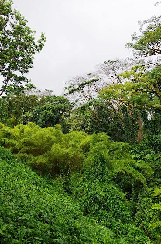 06-23-13 Big Island Waterfalls, Travel to Kauai - IMGP8830.JPG
