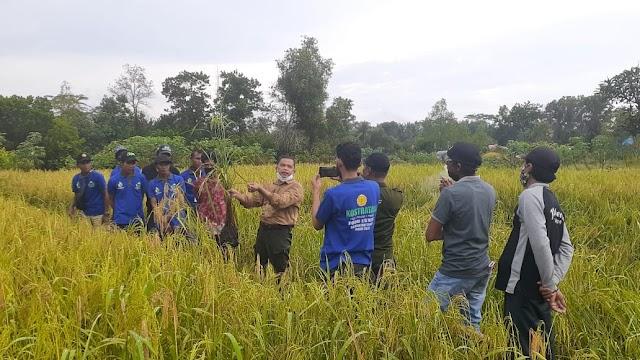 Tingkatkan Kapasitas Penangkar di Bataguh, BBPP Binuang Gelar Pelatihan Produksi Benih Tanaman Padi
