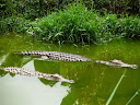 They had a few crocodiles at the reptile zoo - and there really are crocodiles pretty widespread throughout Madagascar.