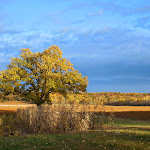 October Oak_Chippewa Falls_WI_Jeannie E Roberts_Copyright_2014.JPG