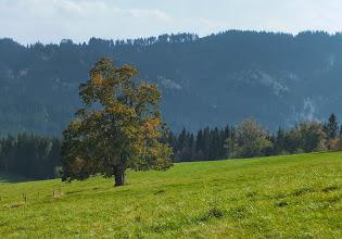 Photo: Lokalita Vyšší Mohelnice. Pohled na strom na louce z turistického chodníka  po červené TZ mezi Pasičkou a Visalajemi.
