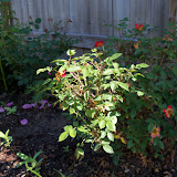 Gardening 2010 - 101_1263.JPG