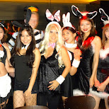 halloween nightlife bunny girls at INHOUSE restaurant, Taipei, Taiwan in Taipei, T'ai-pei county, Taiwan