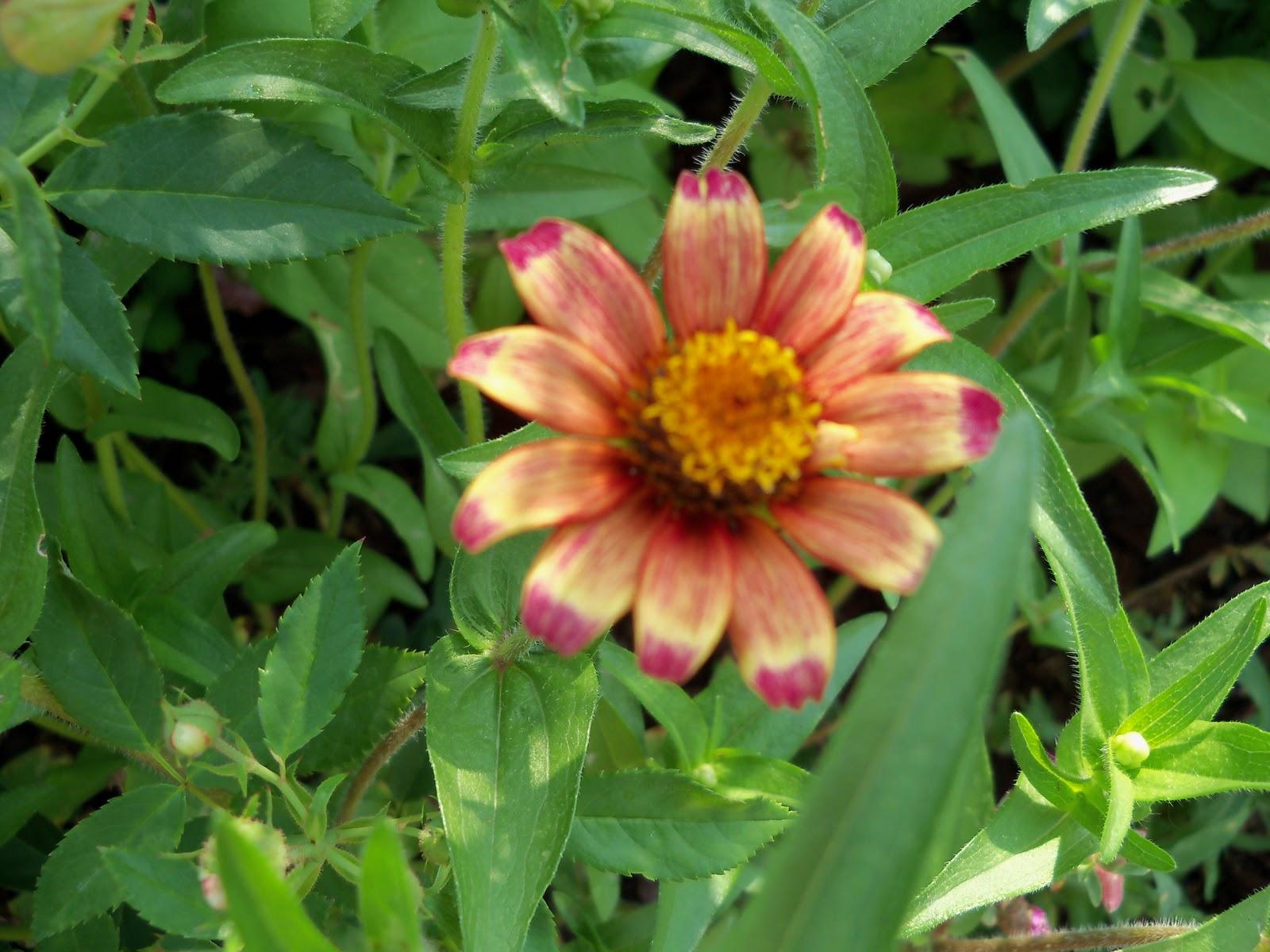 Gardening 2010, Part Two - 101_3292.JPG