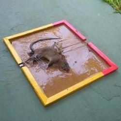 Lem Tikus