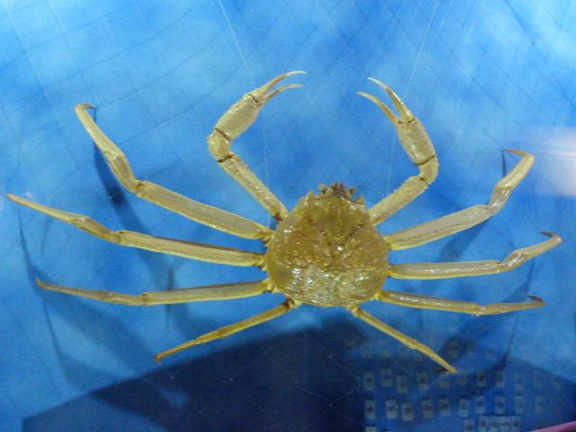 TAIWAN.Toucheng .musée du crabe situé au Pei Kan Resort, surfers,maison Japonaise du chef de gare - P1080710.JPG
