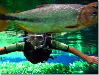 Aquario-natural-bonito-ms-2