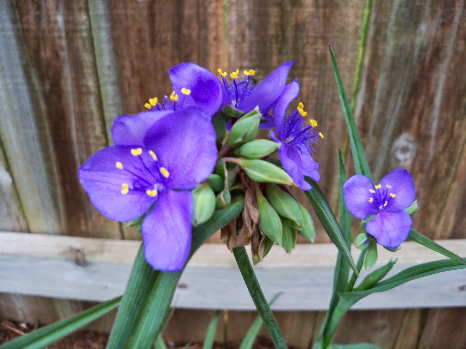 Gardening 2014 - 116_1458.JPG