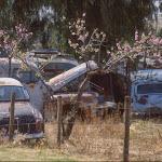 W05 Old Car Dump.jpg