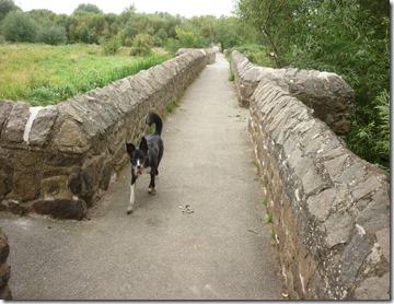 13 aylestone packhorse bridge