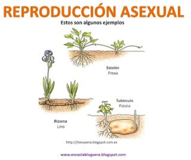 Videos de reproduccion asexual