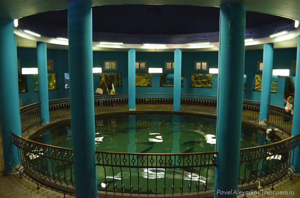 Бассейн с осетрами