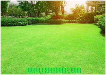 8 Tips Merawat Rumput Untuk Taman Selalu Hijau dan Segar