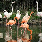 上海野生动物园 Shanghai Wild Animal Park