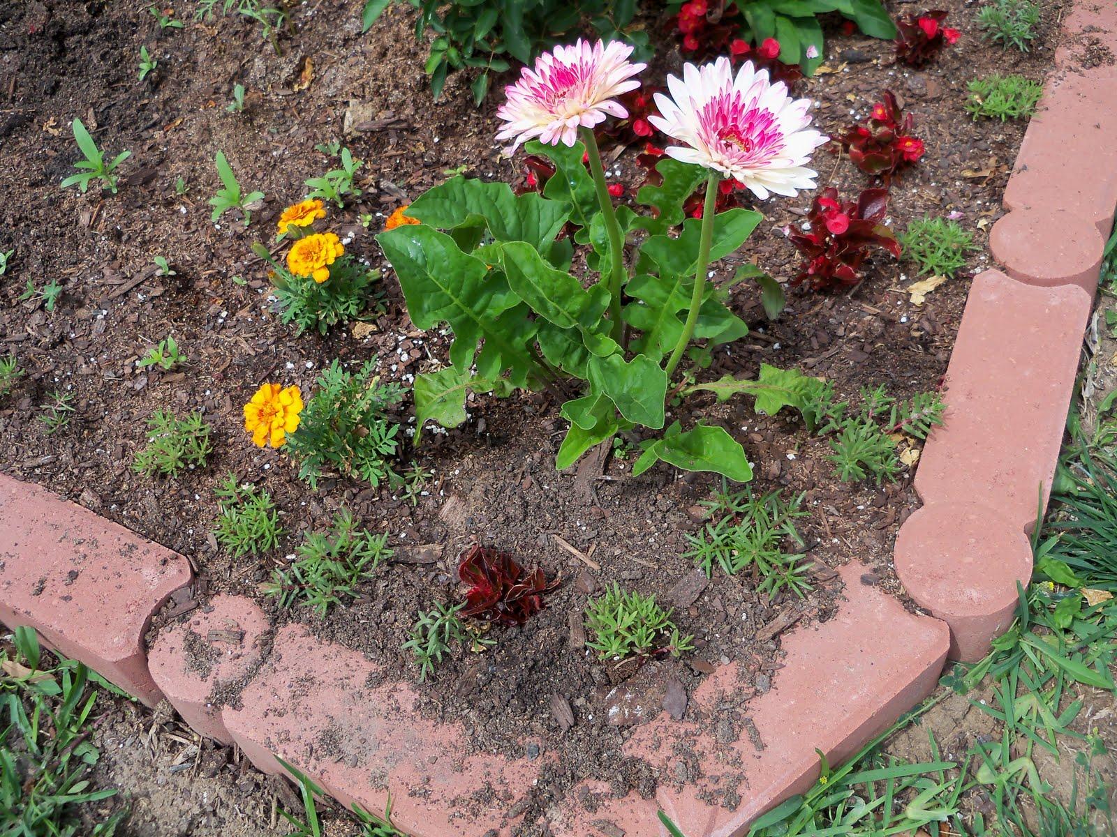Gardening 2010 - 101_1058.JPG
