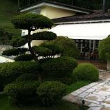Garten in St. Gallen. Gartenbonsai auf Terrasse