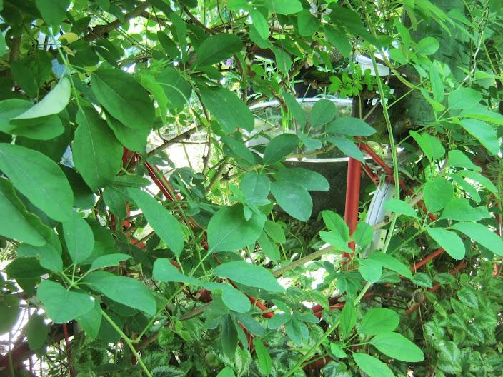 Cabara le jardin des etamines 2 le blog de mes for Jardin aux plantes
