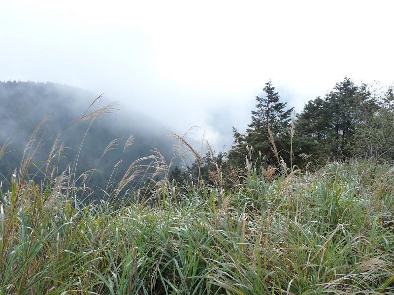 TAIWAN ,pas loin de Taipei Taipingshan, puis Taipei Daan park - P1030928.JPG