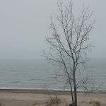 george_stein-Lone_Tree__Beverly_Shores.jpg