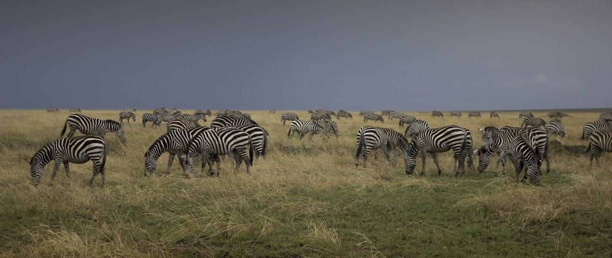 TanzaniaIMG_1139_1.jpg