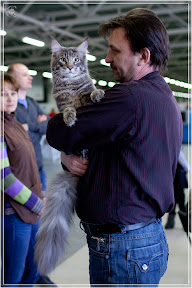 cats-show-24-03-2012-fife-spb-www.coonplanet.ru-013.jpg