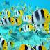 Mengapa Ikan Tidak Tenggelam?