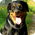 Rottweiler Dog Pack 3 Lwp icon