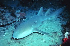 Freak shark attack off Florida coast