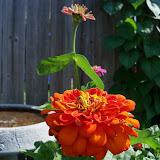 Gardening 2011 - 100_7920.JPG