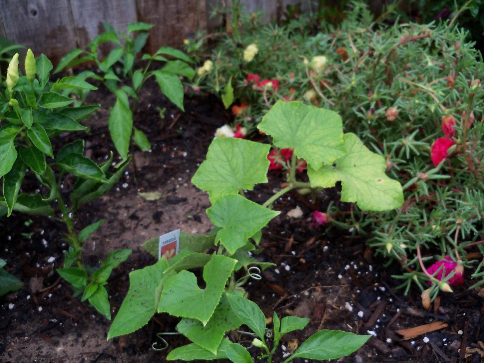Gardening 2010, Part Two - 101_3223.JPG