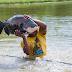 Duas pessoas se contaminam com rabdomiólise após comer tambaqui no Amazonas