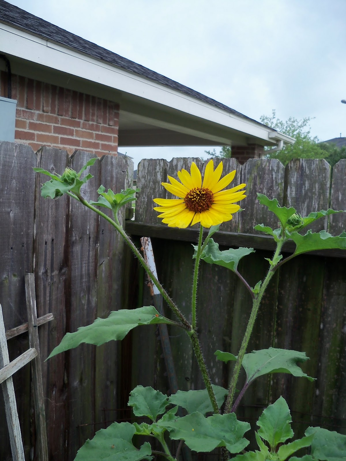 Gardening 2015 - 116_9257.JPG