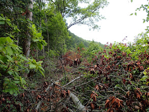 稜線沿いは伐採林で苦戦